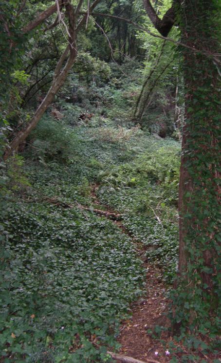 Woods_01